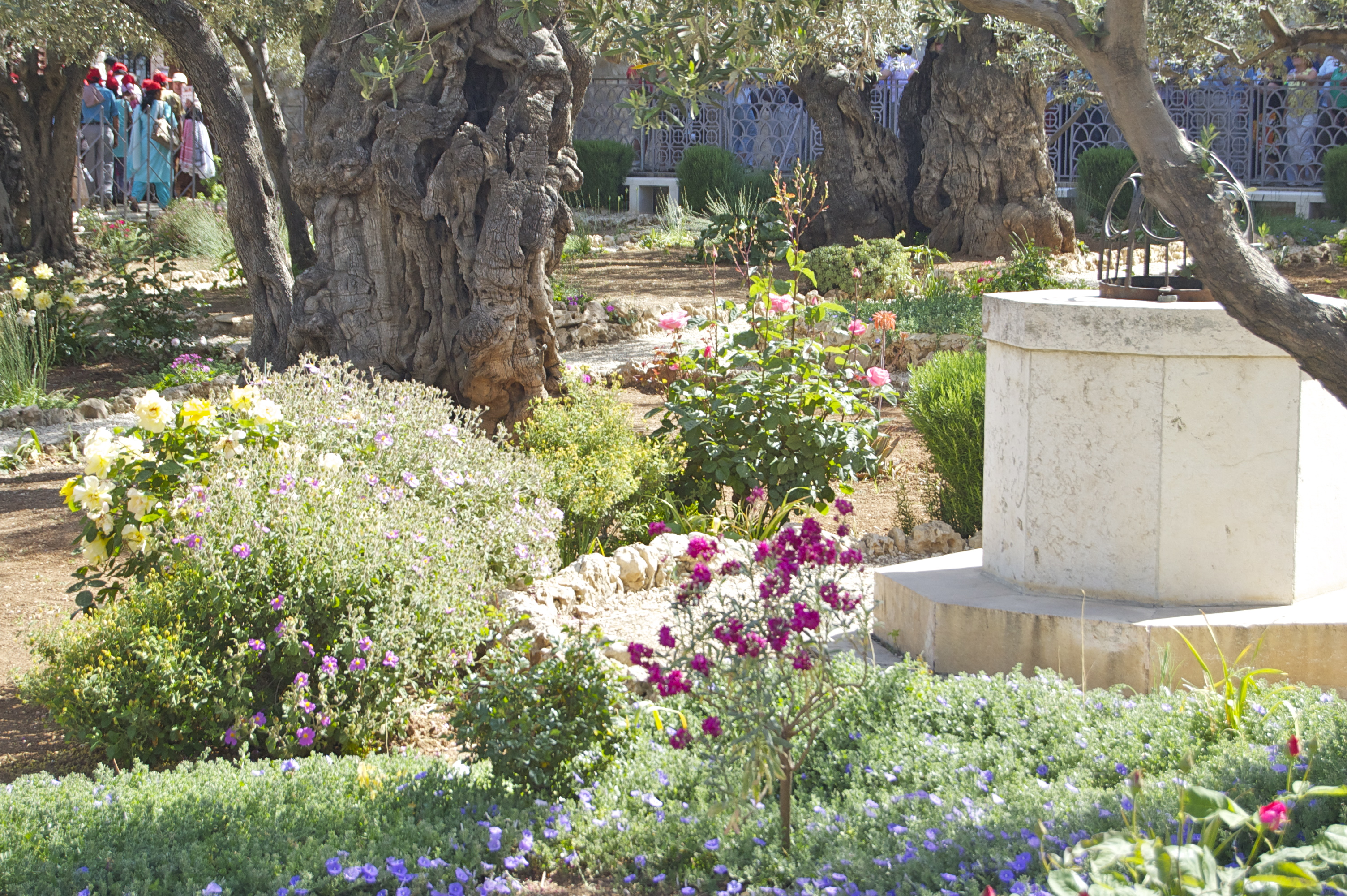 Garden View of Gethsemane